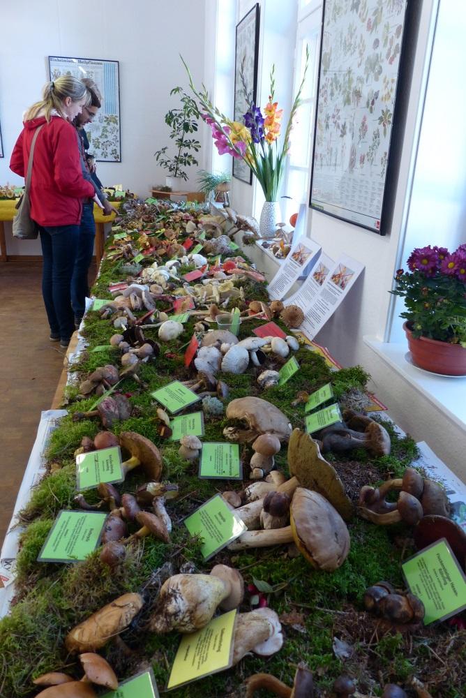 Pilzausstellung in der Naturschutzstation. (Foto: Katja Burmeister)